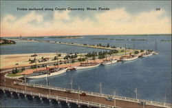 Yachts Anchored Along County Causeway Postcard