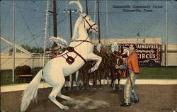 Gainesville Community Circus