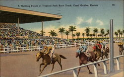 A Thrilling Finish at Tropical Park Race Track