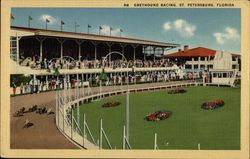 Greyhound Racing Postcard