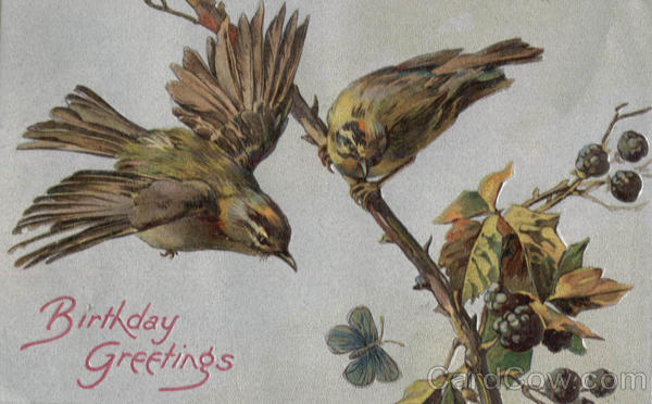 Birthday Greetings - Birds