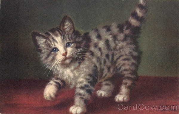 Kitten Signed: A. Laynre Cats