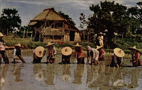 Rice Planting to Accompaniment of Native Guitar, Luzon Philippines