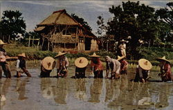Rice Planting to Accompaniment of Native Guitar, Luzon