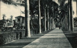 Royal Palm Walk, Boca Raton Club