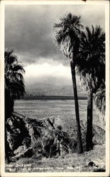 The desert, viewed through the palms