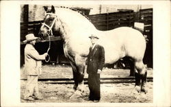 Brooklyn Supreme - World's largest horse