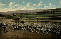 Sheep Scene, Idaho