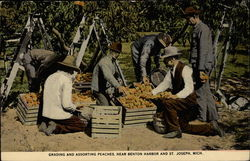 Grading and Assorting Peaches, near Benton Harbor and St. Joseph
