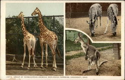 Group of Herbivorous Animals, Zoological Gardens, Cincinnati, Ohio