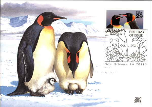 King Penguin Maximum Cards