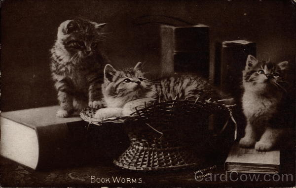 Two cats sit on books and one cat rests in a basket