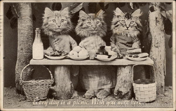 Cats having a picnic