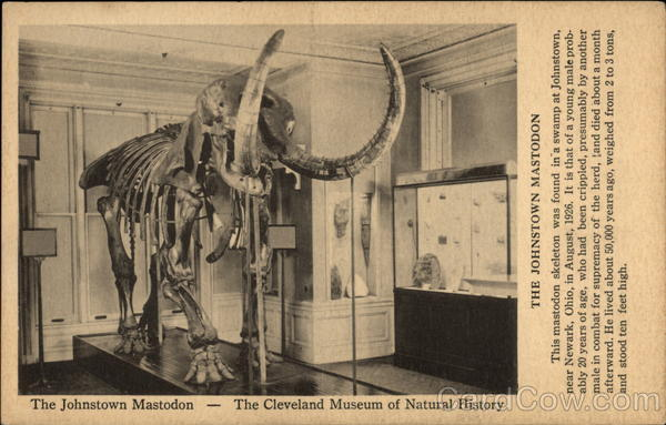The Johnstown Mastodon - The Cleveland Museum of Natural History