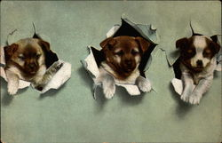 Three dogs popping thorugh paper