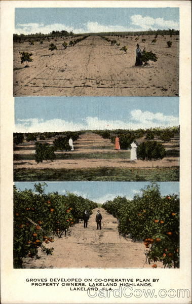 Orange groves Lakeland Florida