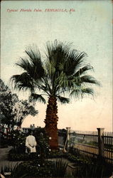 Typical Florida Palm