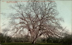 Sir James Hooker Oak Postcard