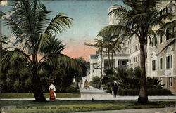Entrance and gardens, Royal Poinciana