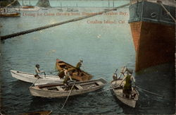 Diving for Coins thrown from Steamer in Avalon Bay