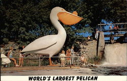World's Largest Pelican