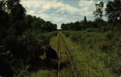 Black bear along the tracks of the Toonerville Trolley
