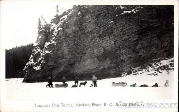 Trappers Dog Teams, Muskway River, B.C. Alaska Highway Canada