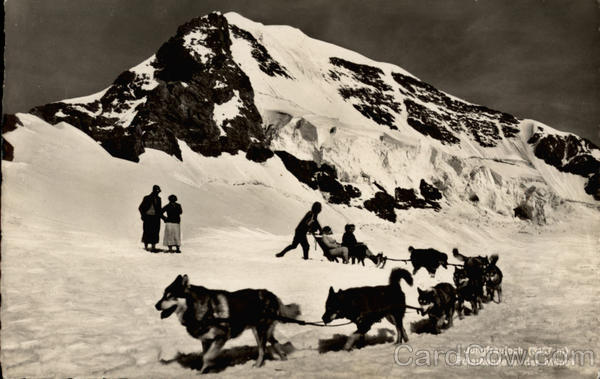 Husky dog sled team on glacier Dogs