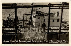 Scow Load of Salmon