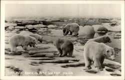 Polar Bears on Artic Ice Floe