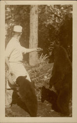 Cook feeding bears Postcard