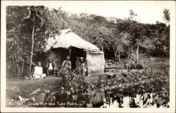 Grass hut and taro patch