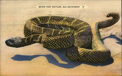 A Seven Foot Rattler of the 'Ole Southwest