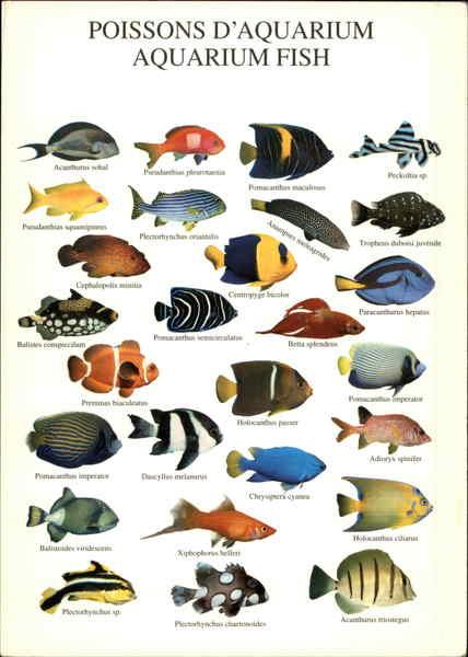 Poissons d 39 aquarium aquarium fish fish for Aquarium fish list