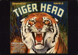 Tiger Head, Orange Crate Label, Washington Navels