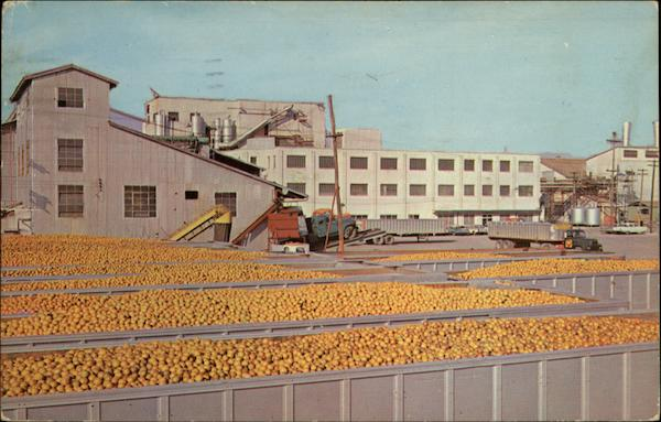 Minute Maid Processing Plant Florida Fruit