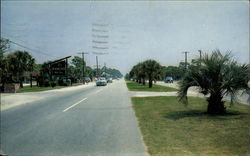 Palms lining The King's Highway
