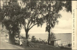 Scenery on the St. John's River
