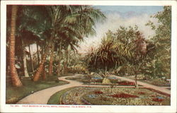 Palm Gardens of Hotel Royal Poinciana