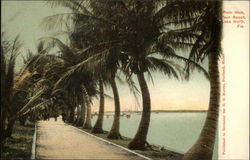 Palm Walk, Palm Beach