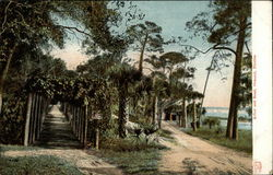 Arbor and Road
