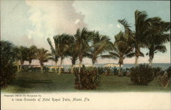 Grounds of Hotel Royal Palm