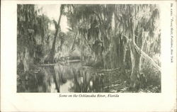 Scene on the Ocklawaha River