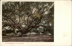Underneath the Live Oak