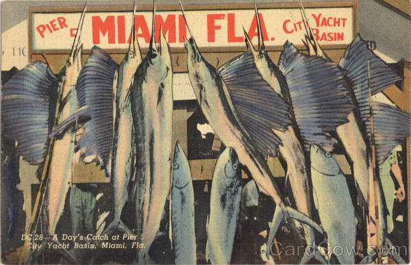 A Day's Catch at Pier 5 City Yacht Basin Miami Beach Florida