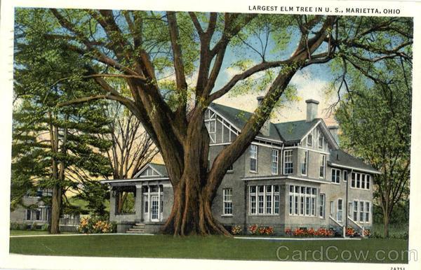 Marietta (OH) United States  City pictures : Largest Elm Tree In The United States Marietta Ohio