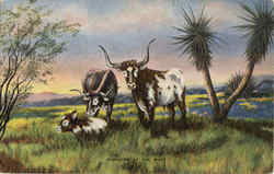 Pioneers of The West - Cattle, Steere