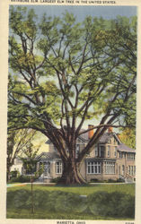 Largest Elm Tree In The United States