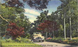 Palm Lined drive in Everglades National Park