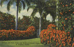 Orange and palm Trees and Walls of Colorful Flame Vine